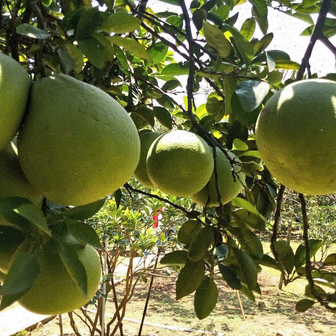【ホーチミン】ローカル列車-ザボン農園の旅