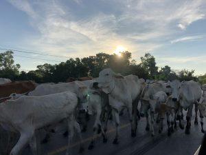 【カンボジア現地情報】国境の町 ポイペトへ行ってきました