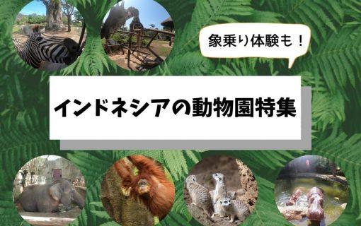 象乗り体験も!インドネシアの動物園特集【バリ島・ジャカルタ・観光情報】