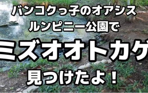 【動画】大都会の公園でオオトカゲ発見!!【タイ・観光情報】