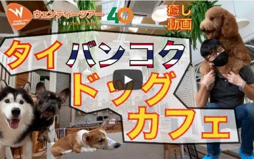 【動画】バンコク・タイ人に人気のドッグカフェに行ってみました!